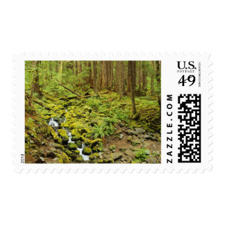 WA, Olympic National Park, Stream with mossy Postage