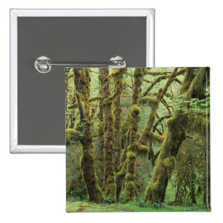 WA, Olympic NP, Hoh Rain Forest, Hall of 2 Inch Square Button