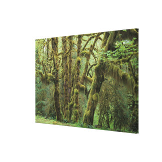 WA, Olympic NP, Hoh Rain Forest, Hall of Stretched Canvas Print