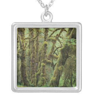 WA, Olympic NP, Hoh Rain Forest, Hall of Custom Necklace