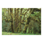 WA, Olympic NP, Hoh Rain Forest, Hall of Photograph