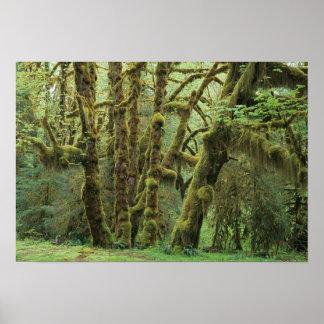 WA, Olympic NP, Hoh Rain Forest, Hall of Print