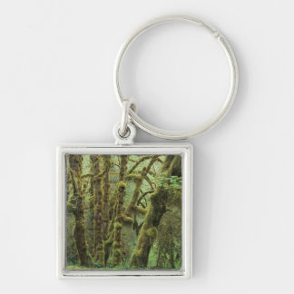 WA, Olympic NP, Hoh Rain Forest, Hall of Silver-Colored Square Keychain