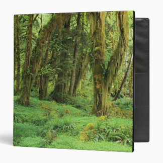 WA, Olympic NP, Quinault Rain Forest, moss Binders