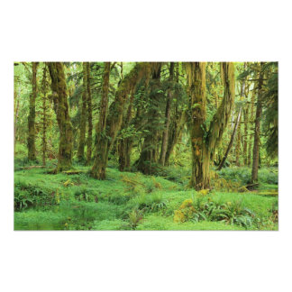 WA, Olympic NP, Quinault Rain Forest, moss Photo Print