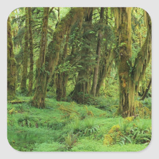 WA, Olympic NP, Quinault Rain Forest, moss Stickers