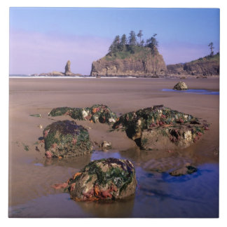 WA, Olympic NP, Second Beach with tidepools and Ceramic Tile