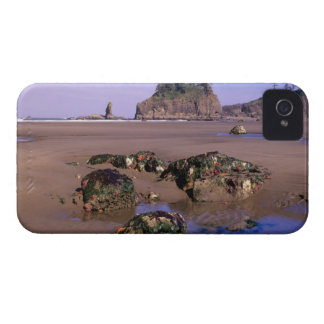 WA, Olympic NP, Second Beach with tidepools and iPhone 4 Case-Mate Cases