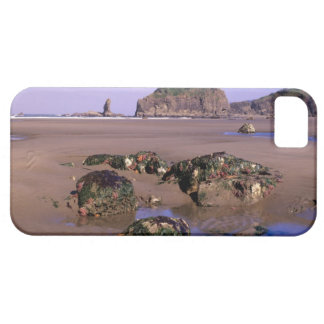 WA, Olympic NP, Second Beach with tidepools and iPhone 5 Case