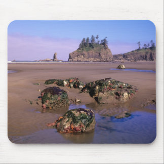 WA, Olympic NP, Second Beach with tidepools and Mouse Pad