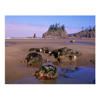 WA, Olympic NP, Second Beach with tidepools and Postcard