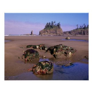WA, Olympic NP, Second Beach with tidepools and Poster