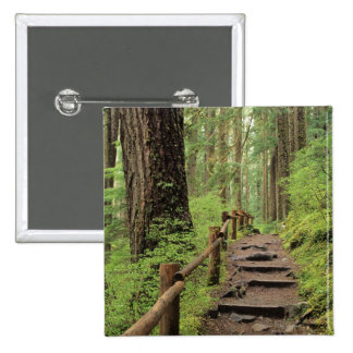 WA, Olympic NP, Sol Duc Valley, rainforest Pinback Buttons