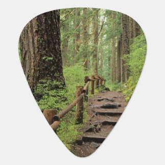 WA, Olympic NP, Sol Duc Valley, rainforest Guitar Pick