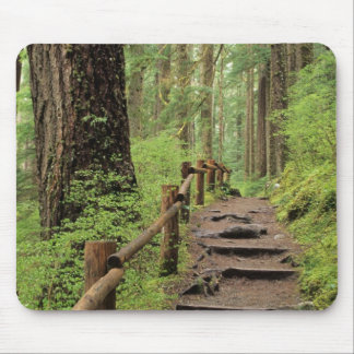 WA, Olympic NP, Sol Duc Valley, rainforest Mouse Pad