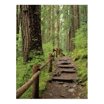 Christmas Themed WA, Olympic NP, Sol Duc Valley, rainforest Postcard