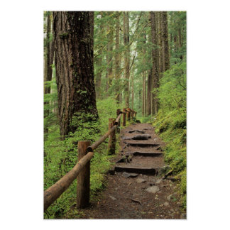 WA, Olympic NP, Sol Duc Valley, rainforest Poster