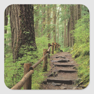 WA, Olympic NP, Sol Duc Valley, rainforest Square Sticker