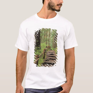 WA, Olympic NP, Sol Duc Valley, rainforest T-Shirt
