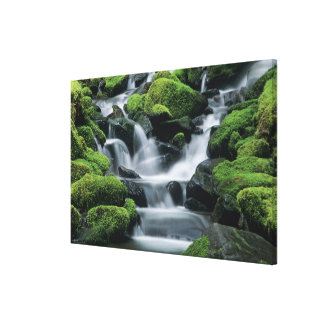 WA, Olympic NP, Sol Duc Valley, stream with Canvas Print