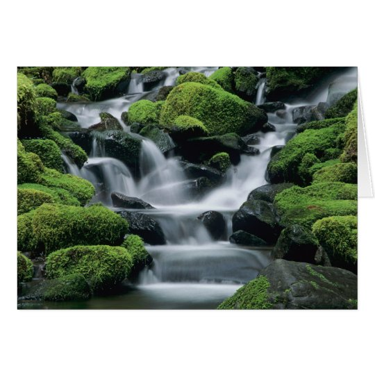 WA, Olympic NP, Sol Duc Valley, stream with Card