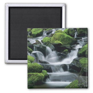 WA, Olympic NP, Sol Duc Valley, stream with Magnet