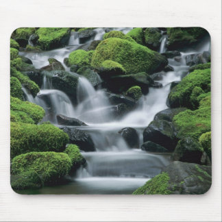WA, Olympic NP, Sol Duc Valley, stream with Mouse Pad