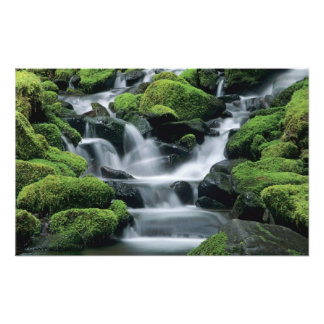 WA, Olympic NP, Sol Duc Valley, stream with Photo Print