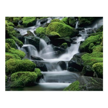 Christmas Themed WA, Olympic NP, Sol Duc Valley, stream with Postcard
