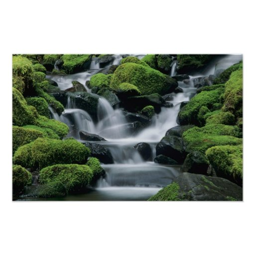 WA, Olympic NP, Sol Duc Valley, stream with Poster