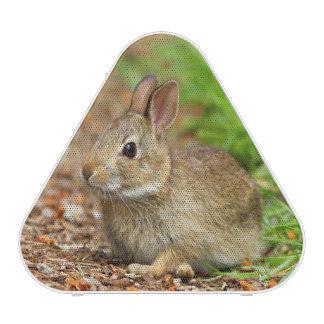 WA, Redmond, conejo del bebé del conejo de rabo Altavoz Bluetooth