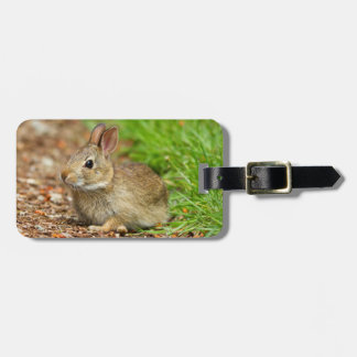 WA, Redmond, Eastern Cottontail baby rabbit Bag Tag