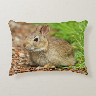 WA, Redmond, Eastern Cottontail baby rabbit Decorative Pillow