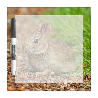 WA, Redmond, Eastern Cottontail baby rabbit Dry-Erase Board