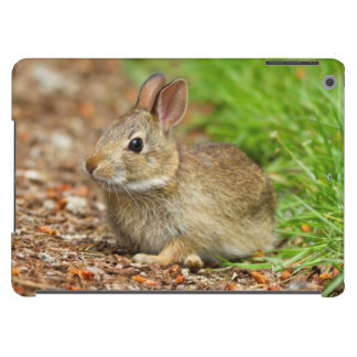 WA, Redmond, Eastern Cottontail baby rabbit iPad Air Covers