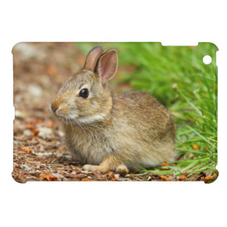WA, Redmond, Eastern Cottontail baby rabbit iPad Mini Covers