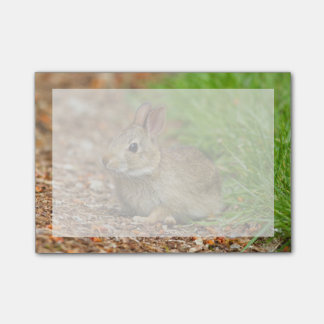 WA, Redmond, Eastern Cottontail baby rabbit Post-it Notes