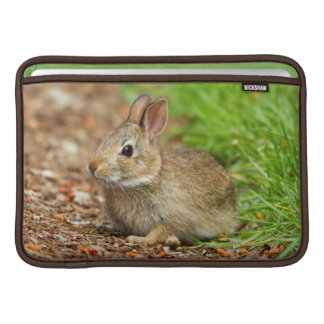 WA, Redmond, Eastern Cottontail baby rabbit Sleeve For MacBook Air