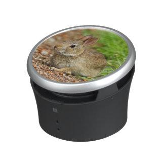 WA, Redmond, Eastern Cottontail baby rabbit Speaker