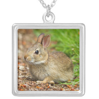 WA, Redmond, Eastern Cottontail baby rabbit Square Pendant Necklace