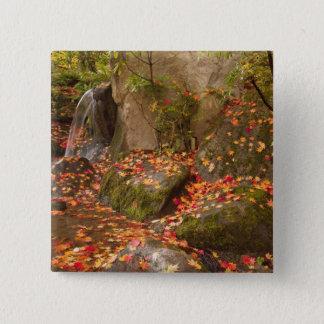 WA, Seattle, Washington Park Arboretum, Japanese Button