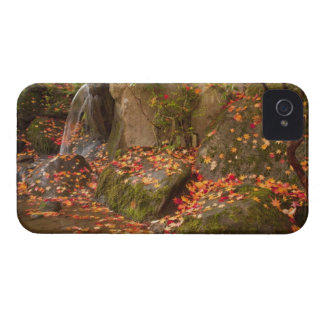 WA, Seattle, Washington Park Arboretum, Japanese iPhone 4 Case-Mate Case