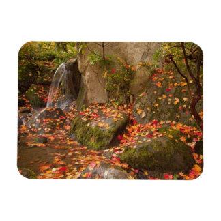 WA, Seattle, Washington Park Arboretum, Japanese Magnet