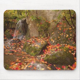 WA, Seattle, Washington Park Arboretum, Japanese Mouse Pad