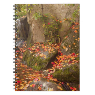 WA, Seattle, Washington Park Arboretum, Japanese Notebook