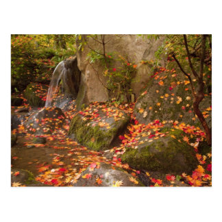 WA, Seattle, Washington Park Arboretum, Japanese Postcard