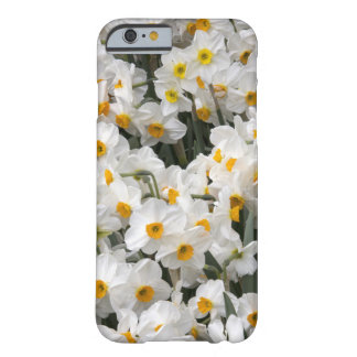 WA, Skagit Valley, Daffodil pattern Barely There iPhone 6 Case