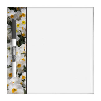 WA, Skagit Valley, Daffodil pattern Dry Erase Whiteboard