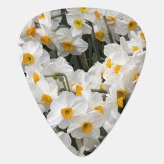 WA, Skagit Valley, Daffodil pattern Guitar Pick