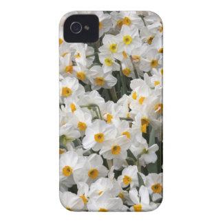 WA, Skagit Valley, Daffodil pattern iPhone 4 Case